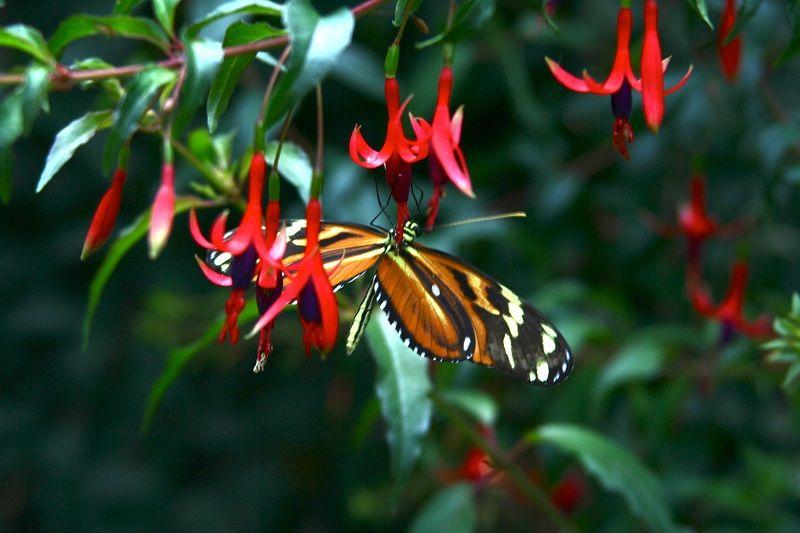 Una delle tantissime splendide farfalle tropicali dell'Oasi di Sant'Alessio. #bambini #famiglie #animali #disabilità #estate #oasisantalessio #FondazioneAriel