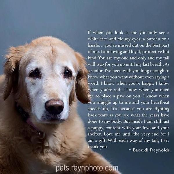 Pin By Dawn Bostic On Pet Quotes Dog Poems Senior Dogs Quotes Dog Quotes