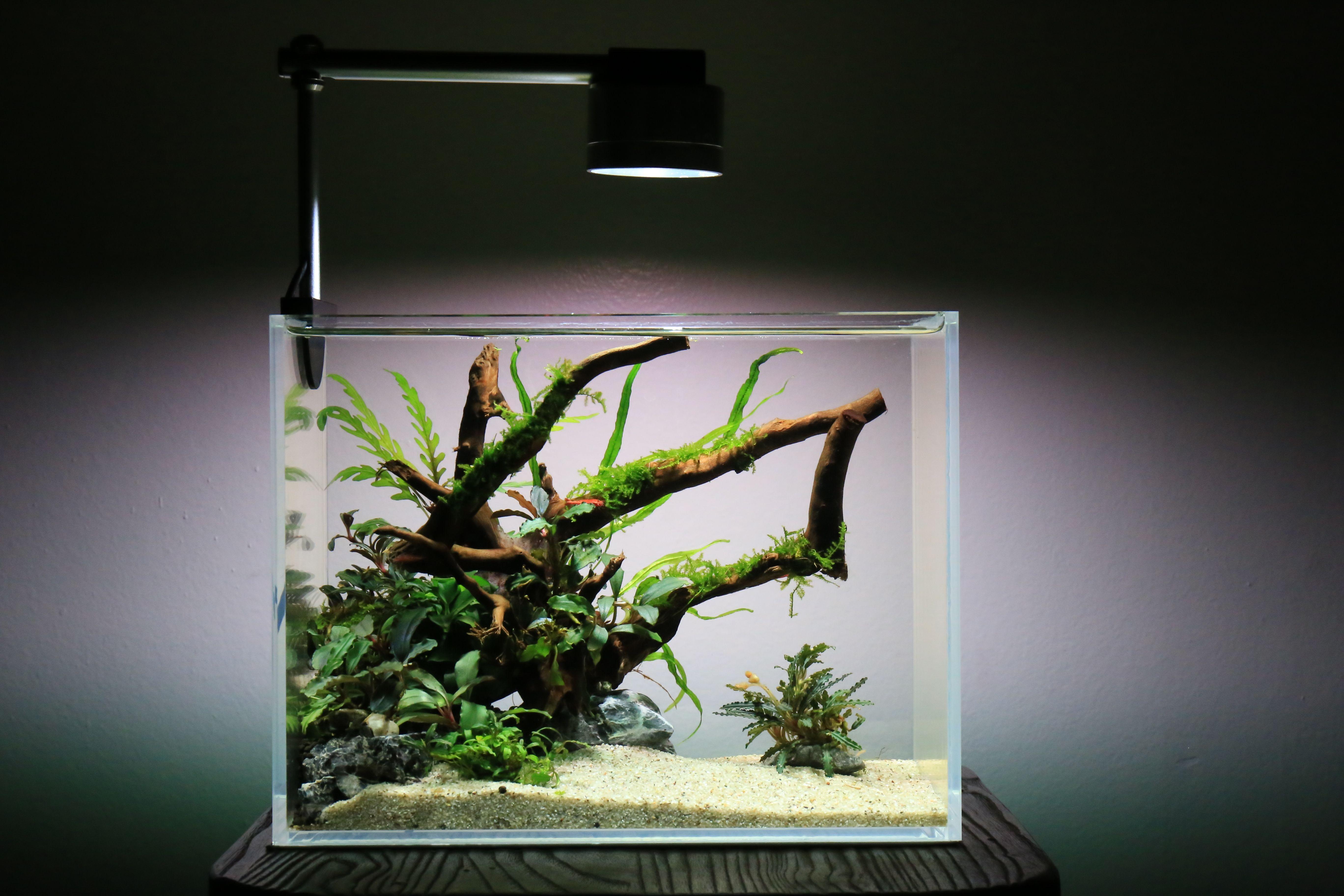 a66c36e2a70bdcbe8f2b84ae609b96ea Luxe De Crevette Aquarium Des Idées