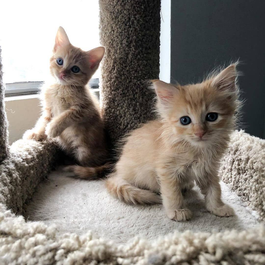 My Dreamy Cats On Instagram Follow Us Mydreamycats If You Are A Real Cat Lover We Publish Cute Cats Photo And Amazing Videos Cute Cats Cat Photo Cats