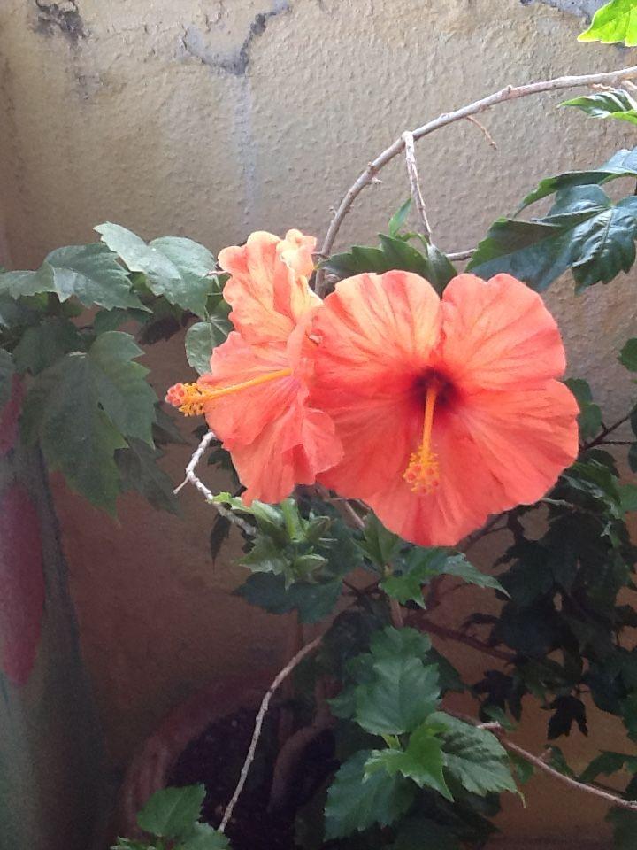 Adoro as minhas flores que abrem sempre que preciso de um sorriso