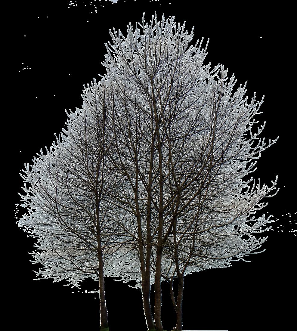 Free Texture Multiple Trees Trees Lugher Texture Library Tree Photoshop Minimalist Poster Scandinavian Art
