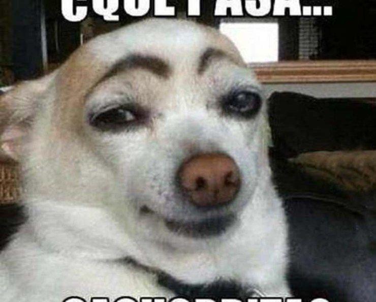 Memes Chistosos De Perros 24