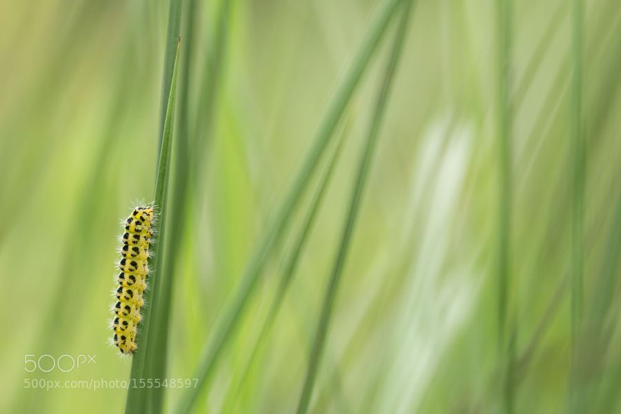Metamorphosis here I come! by nrussel. @go4fotos