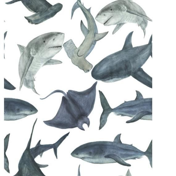 Nursery sharks wallpaper, shark wallpaper, wallpaper