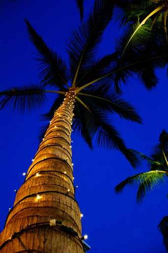 Hawaii_Christmas (5) Hawaii, Palm and Beach
