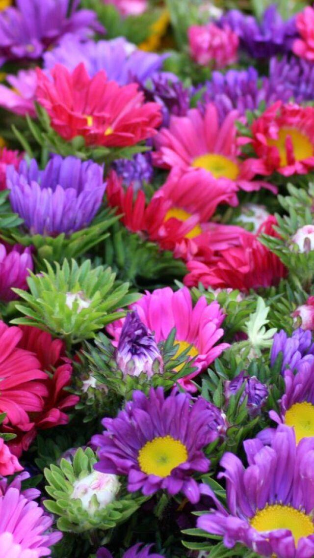 ورود ملونه Beautiful Flowers Pretty Flowers Flower Farmer