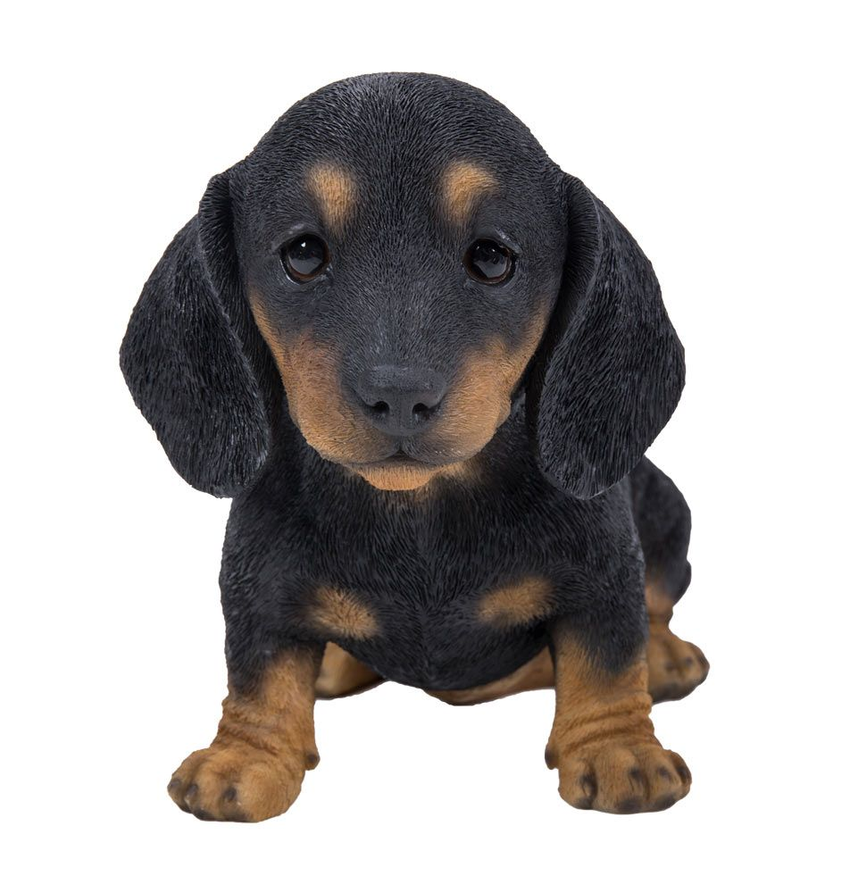55+ Bichon Frise Puppy Price In Delhi in 2020 Bichon