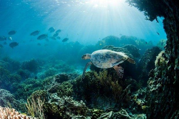 In pictures: Celebrating Tremendous Turtles for #WorldTurtleDay | Greenpeace UK