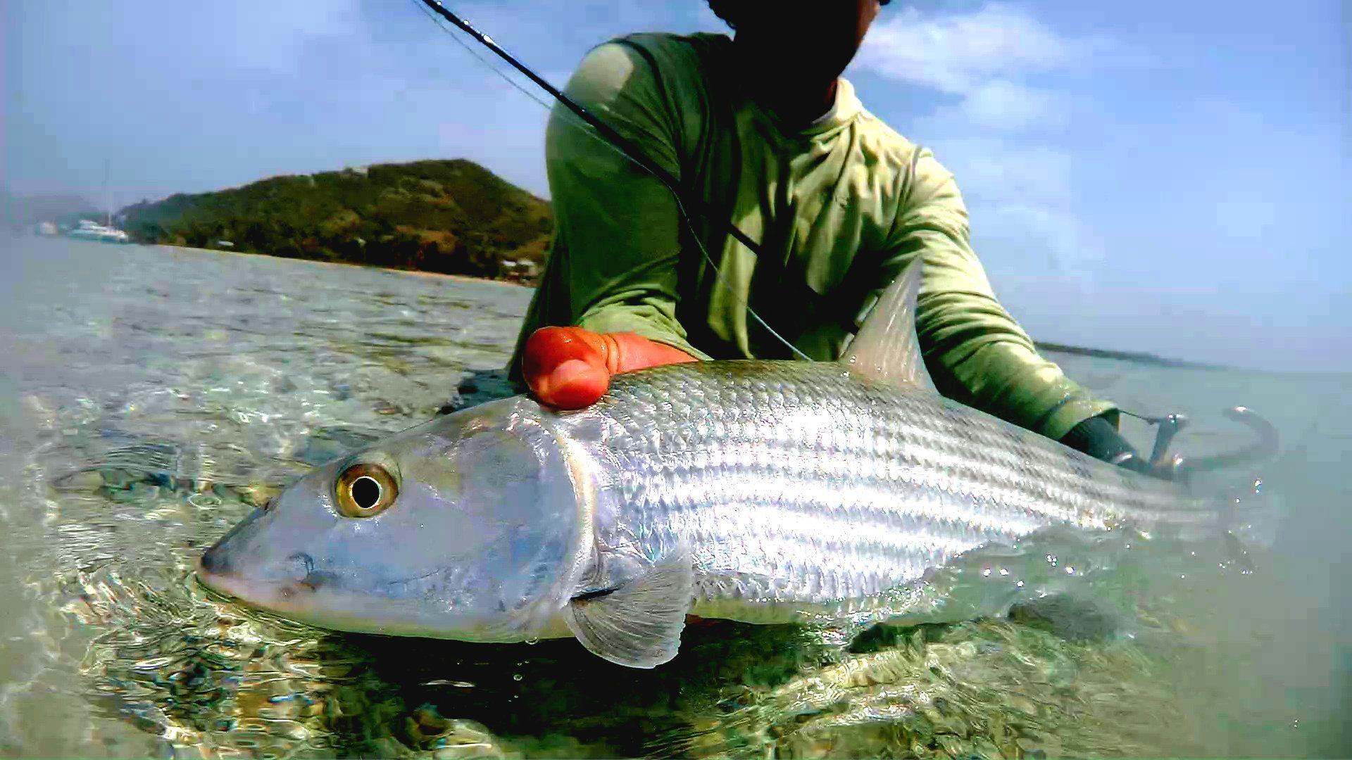 Nice Bonefish Catch In Our Secret Spots In The Grenadines Flyfishing Fishinginthegrenadines Bonefish Grenadine Fly Fishing Fishing Vacation Saltwater Flies