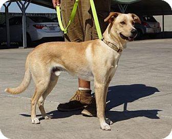 Lathrop, CA Labrador Retriever Mix. Meet Benny, a dog