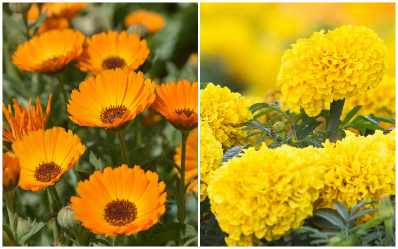 Birth Month Flowers and their Meanings Birth month