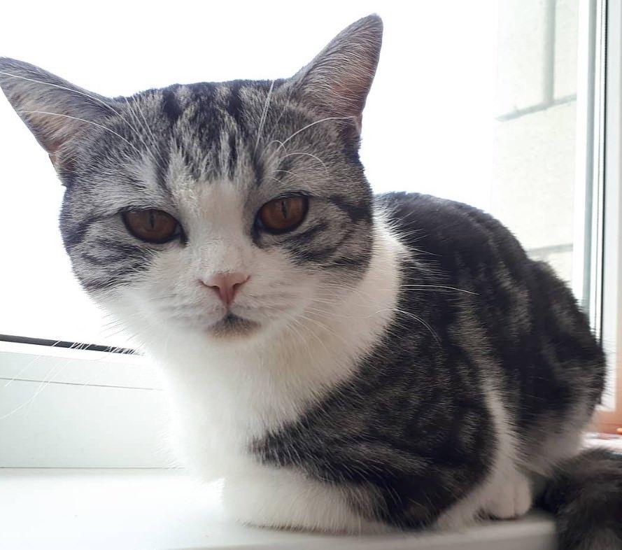 320 Asian Cat Names Japanese And Korean Cat Names Katzen