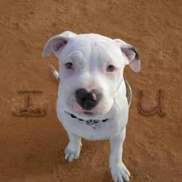 I Just Love His Heart Shaped Nose 3 Animals Dogs Cute Animals