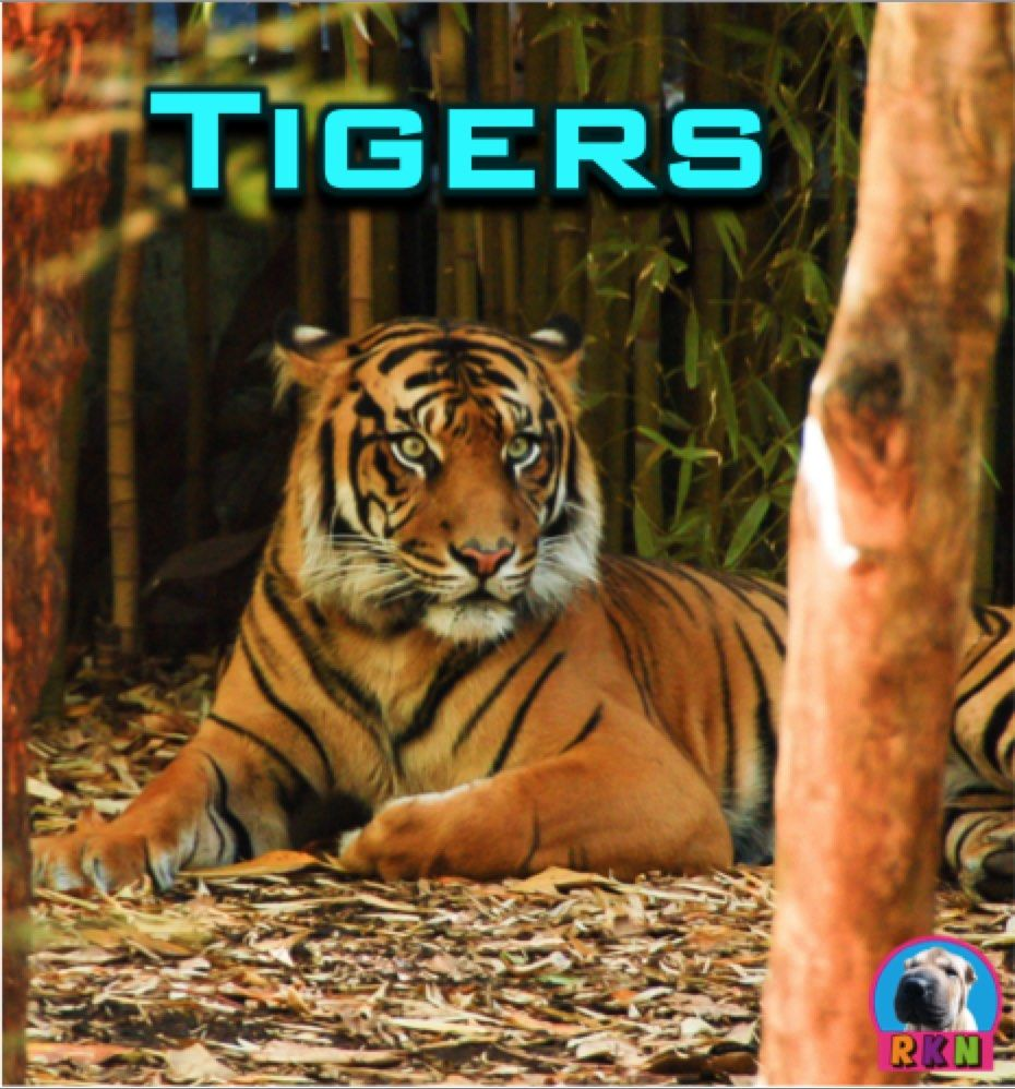 Tigers: Big Cats - Non Fiction Resources - This informative and dynamic  PowerPoint presentation illust… | Higher level thinking activities,  Powerpoint, Activities