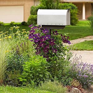 Superb Clematis Makes A Stately Centerpiece For This Lovely Mailbox Landscaping