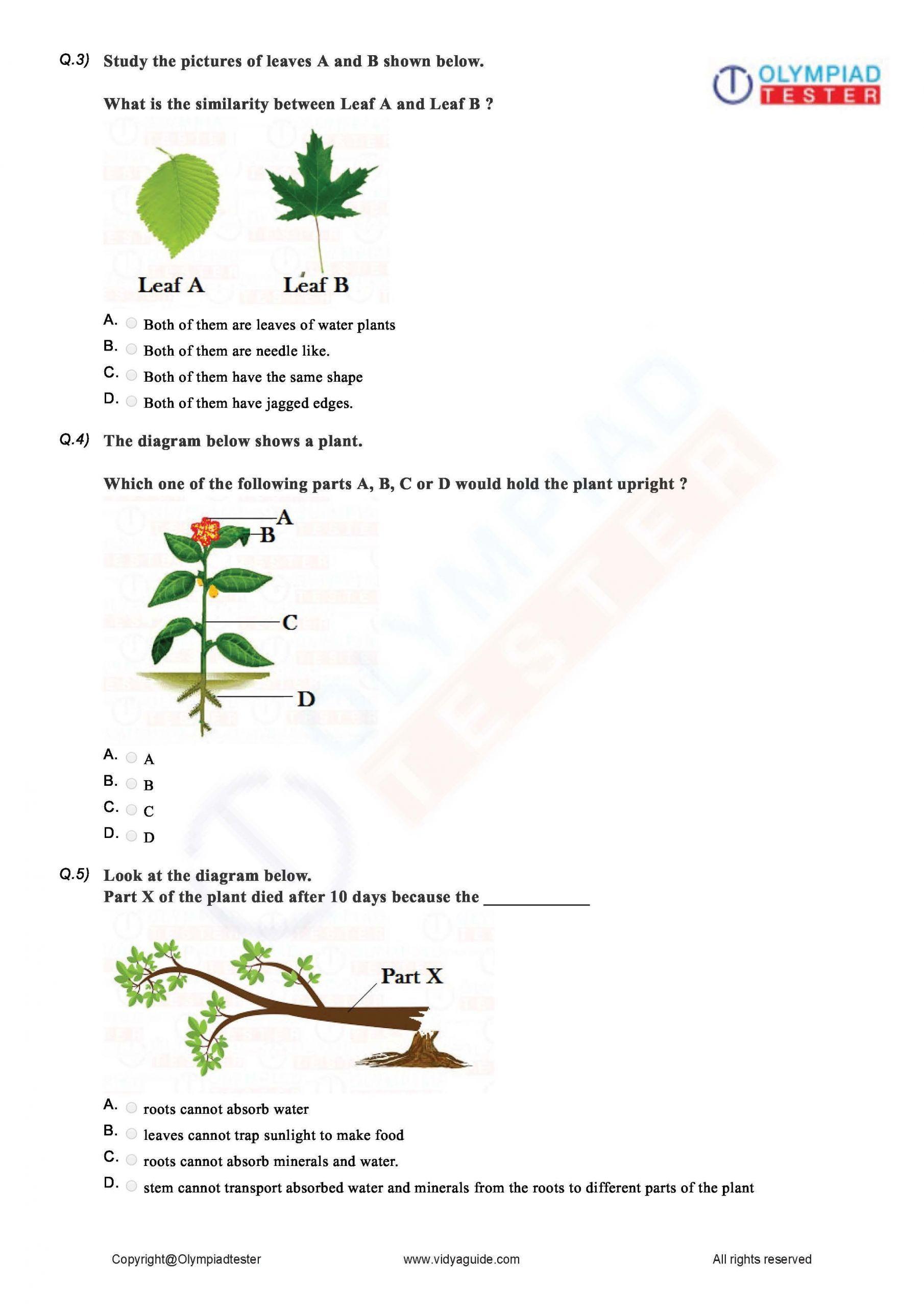 9 Worksheets How Plants Make Food In