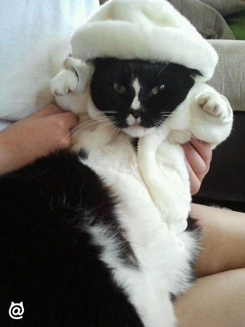 Its <3 #kitten #fluffy #beautiful #cuties