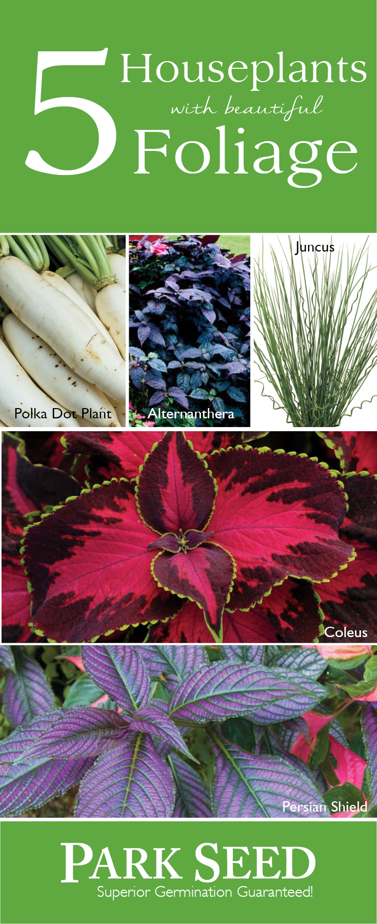 add color to your home decor with these easy flowering houseplants use code pin10 to