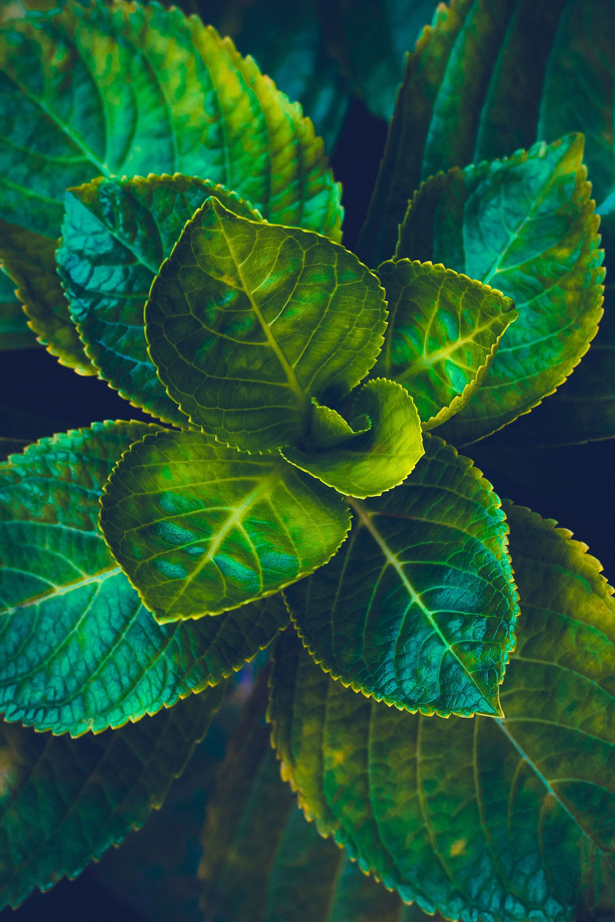 Leaves Green Plant Black Background Nature