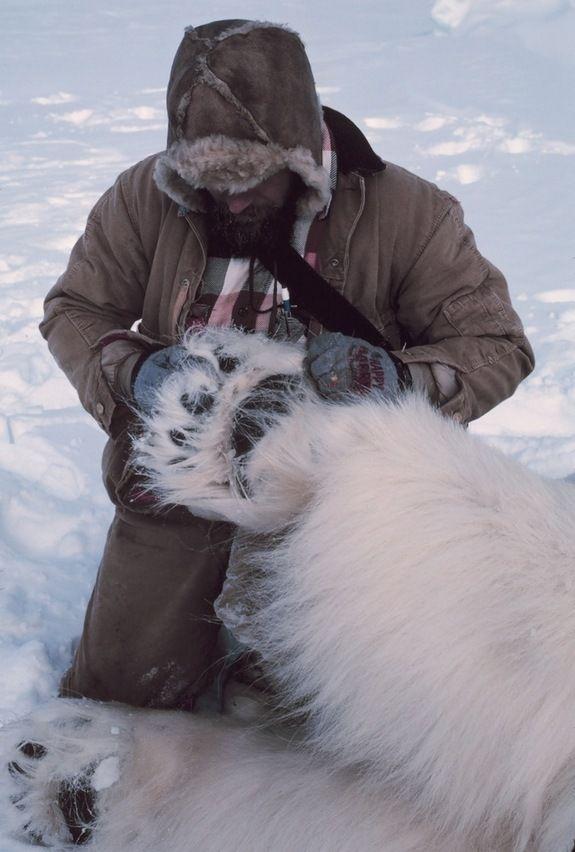 Endangered Beauties: Images of Polar Bears | Photographs, Circles ...
