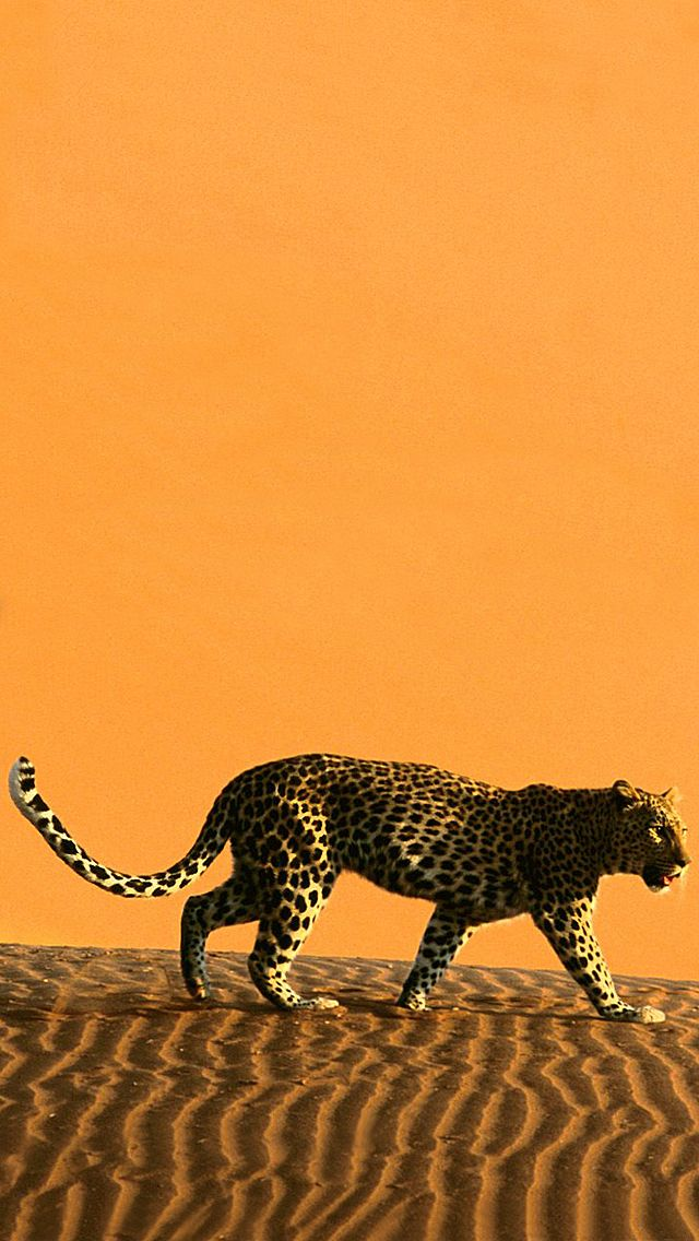 Cheetah iphone 5 wallpapers iphone wallpapers and all such cheetah iphone 5 wallpapers voltagebd Choice Image