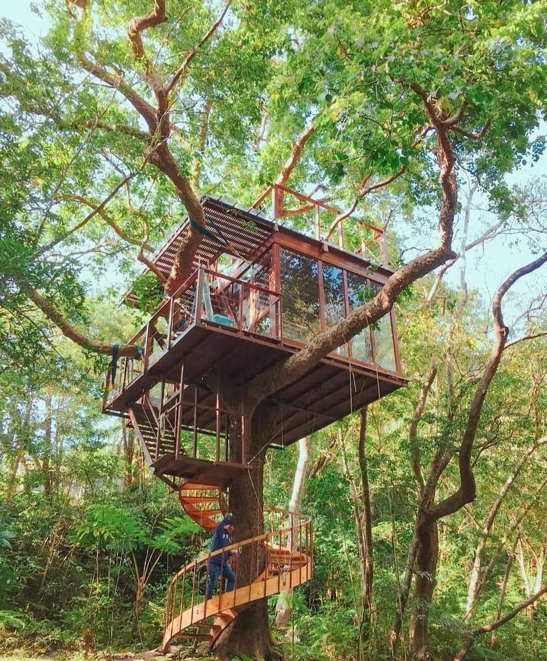 Amazing tree house. 😍 Yes or No? ⁣ ⁣⁣ Credi How the Home