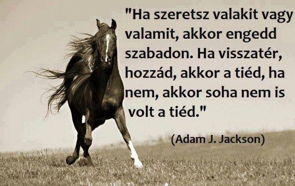 lovas versek idézetek Idézet   Horse quotes, Life quotes, Animals