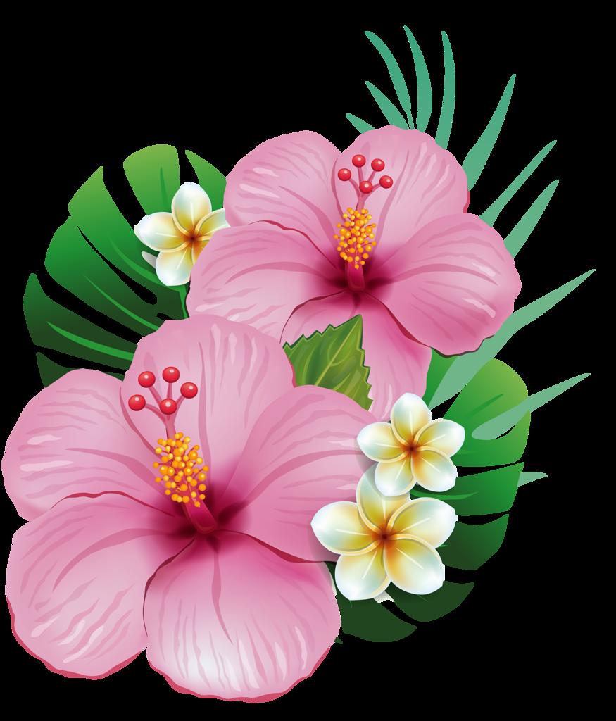 Hawa tropical et fleur - Fleure hawaienne ...