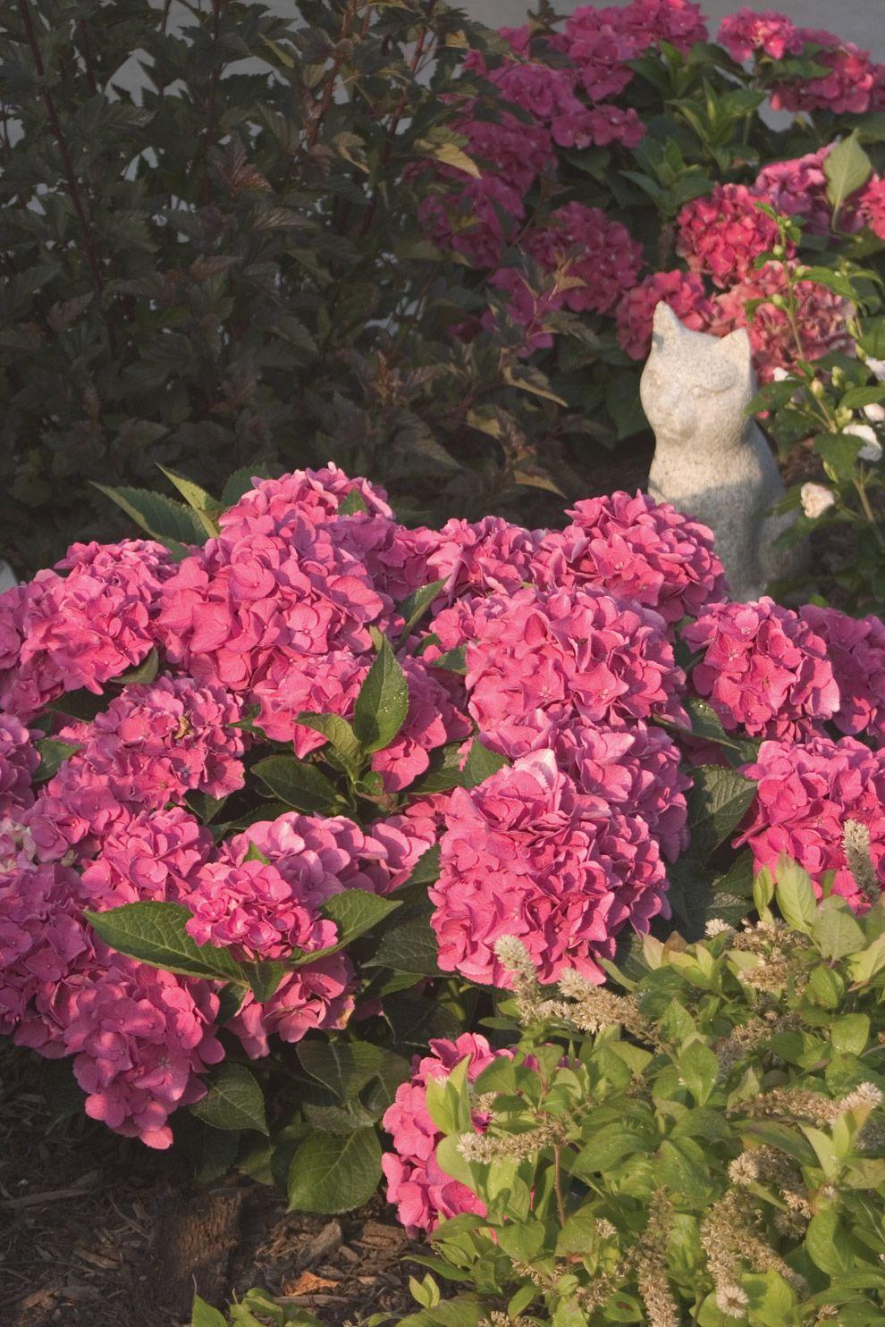 Wisconsin Gardening Enewsletter: Increase Your Success With Growing Hydrangeas