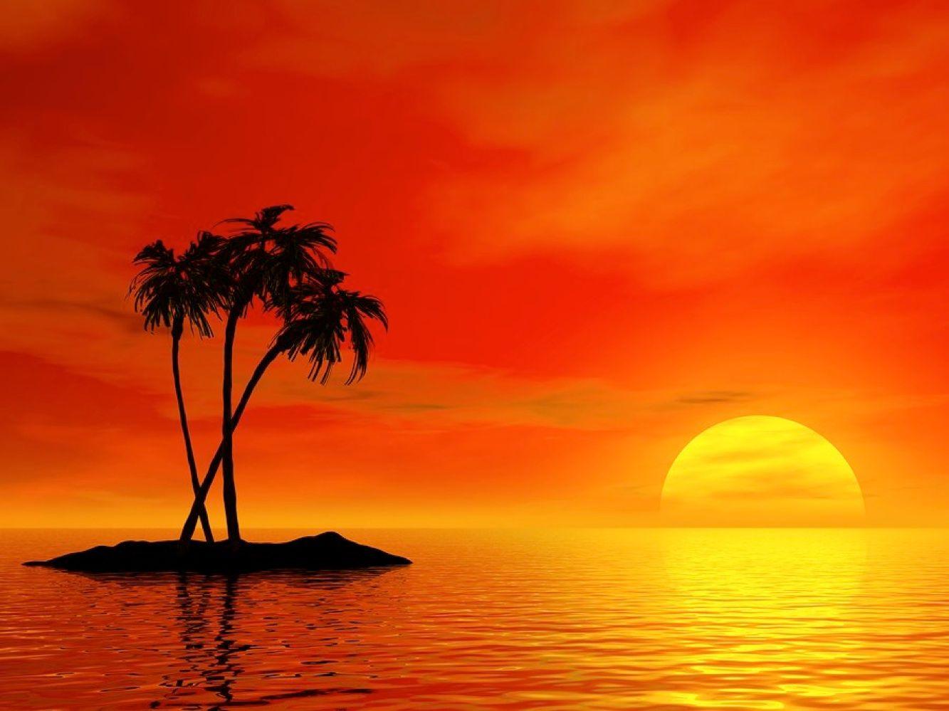 tropical sunset palm tree - photo #12