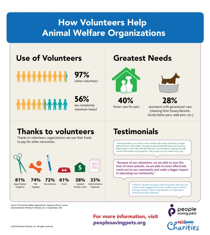 Check Out All The Ways Volunteers Help Pets Want To Volunteer For Your Local Animal Welfare Organization Visit Ht Pet Helpers Pet Organization Animal Welfare