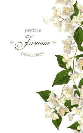 Fiori di gelsomino. Design per il tè, cosmetici naturali, negozio di bellezza, prodotti per la cura della salute biologici, profumi, oli essenziali, aromaterapia. Può essere utilizzato come biglietto di auguri o invito a nozze