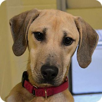 Pin By Courtney Barry On Man S Best Friend Dogs Black Mouth Cur