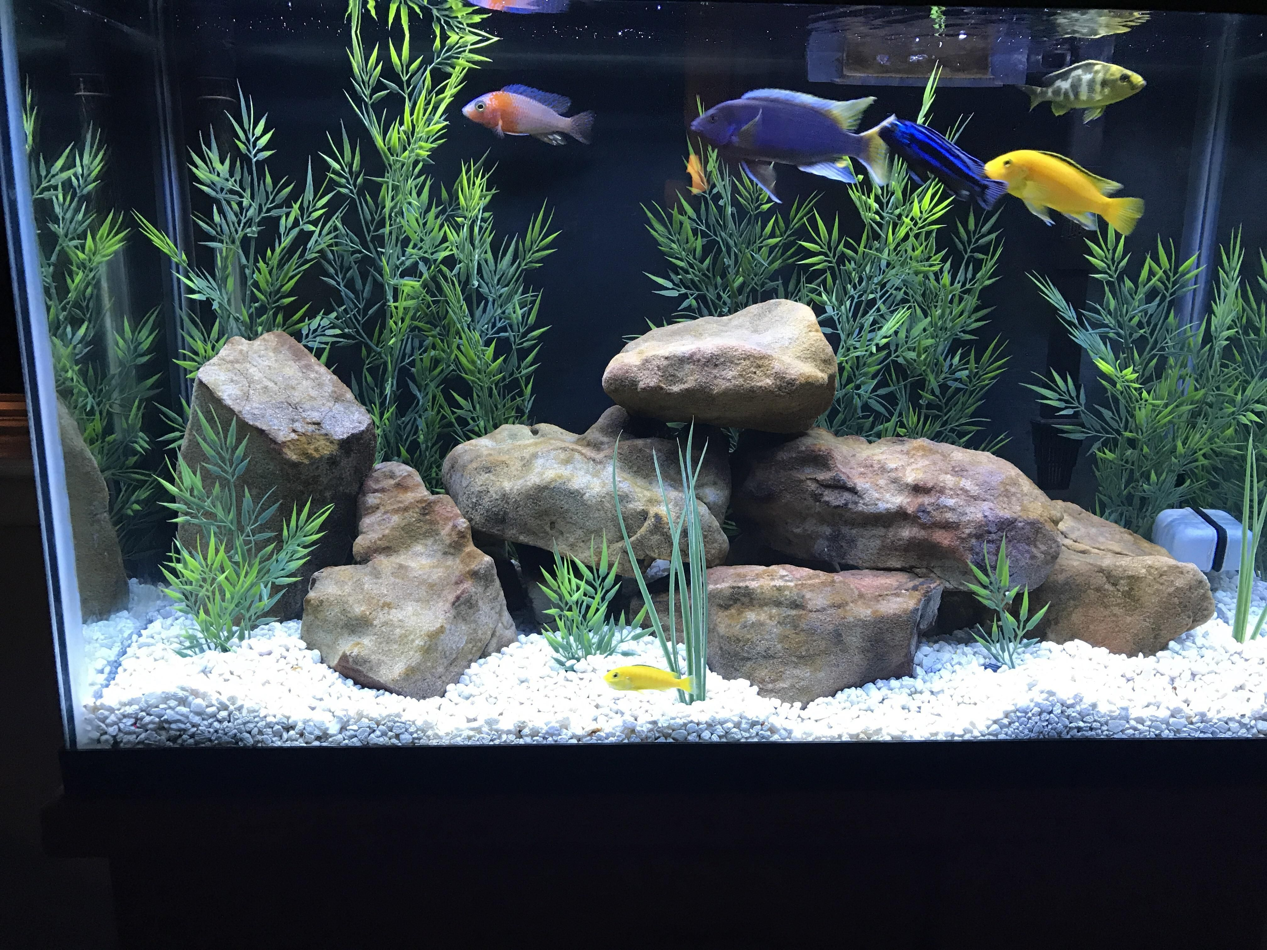 Check out my 30 gallon african cichlid tank how many more for How many gallons is my fish tank