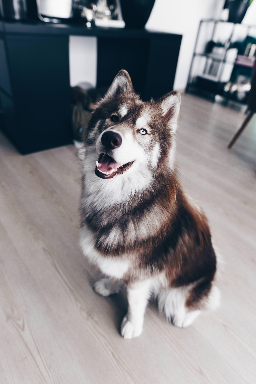 Wildborn Hundefutter Erfahrungen Von Frenchie Mocca Und Husky Teddy Life Und Style Blog Aus Osterreich Hunde Futter Hunde Husky