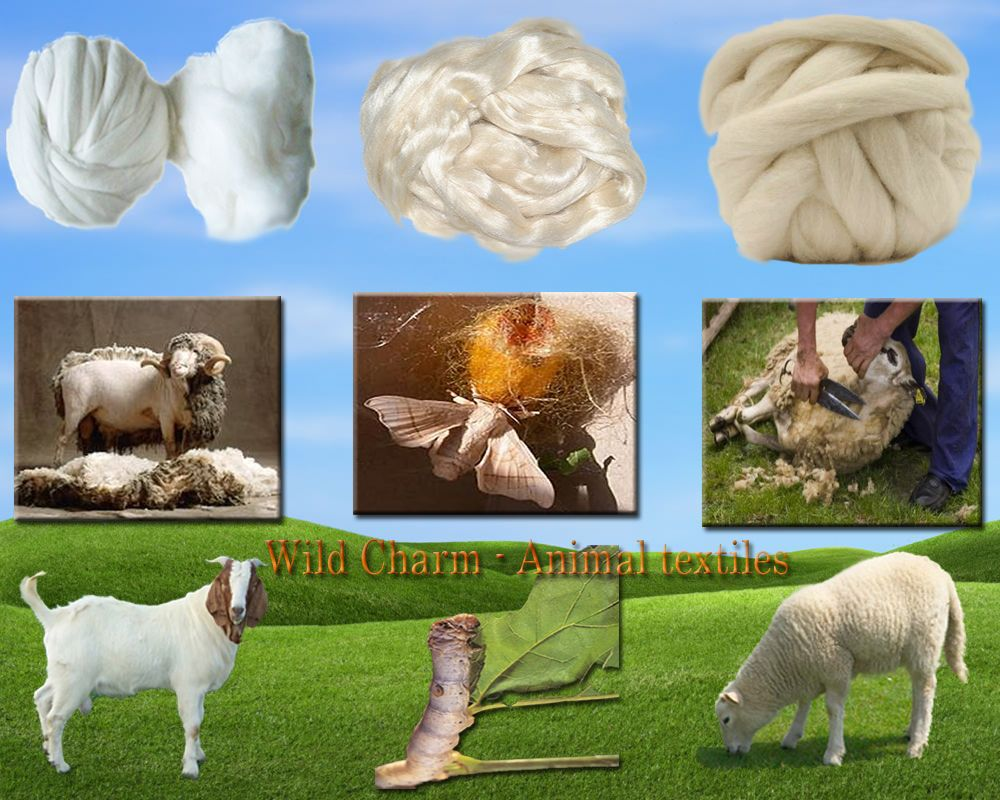 textile-natual-animal-fiber-fibre-wool-cashmere-sheep-