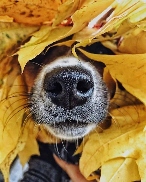 Startup Company Tracks Lost Dogs Using Their Nose Prints Dogtime Animal Noses Dog Photoshoot Dog Photography