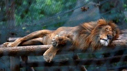 Animais morrem de fome em zoológico na Venezuela  (REUTERS/Carlos Jasso)