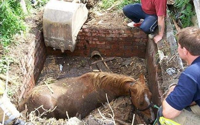 Galería: 9 Fotos conmovedoras de humanos ayudando a animales