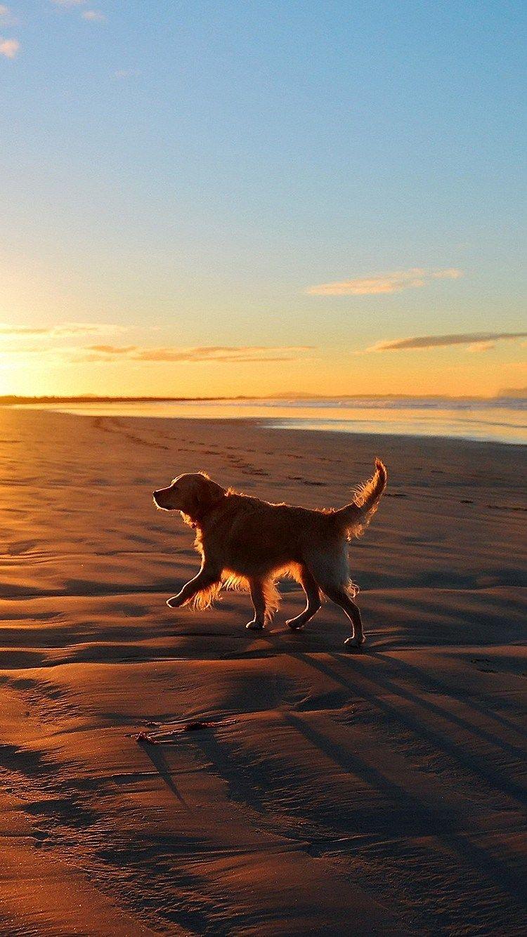 Lonely Walking Dog Sea Beach Iphone 6 Plus Wallpaper Iphone 6