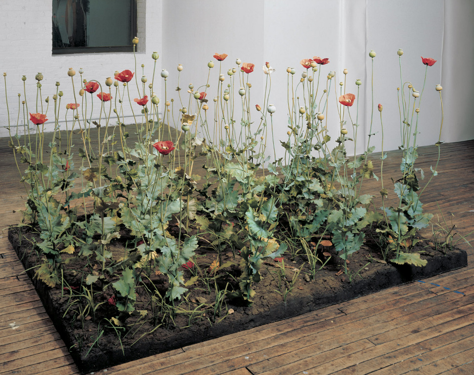 """antdrinker: """"Crop, 1996 by Roxy Paine I just heard this artist speak and he said, among other things, he liked the idea of the potential of these opium poppies to alter the mind or lead to addiction...."""