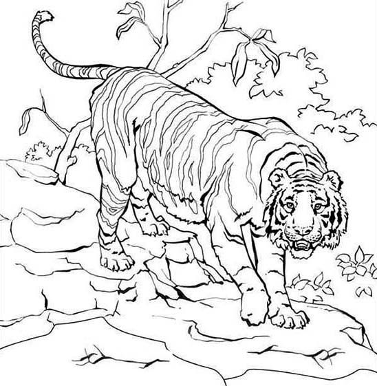 how to draw tiger on tree - Googleu0027da Ara Color Me Fauna - fresh realistic rhino coloring pages