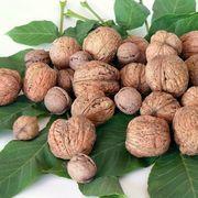 How to Harvest Black Walnut Trees | eHow