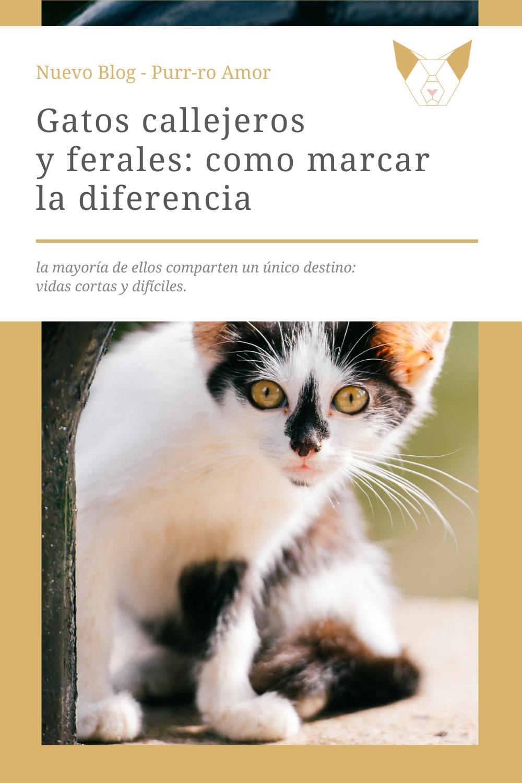 Ayudar A Los Gatos Ferales O Abandonados No Es Difícil Gatos Callejeros Gatos Sociedad Protectora De Animales