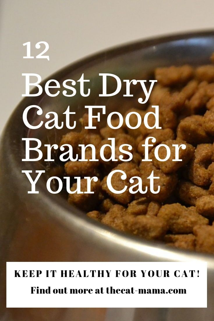 12 Best Dry Cat Food Brands To Buy For Your Cat - The Cat Mama