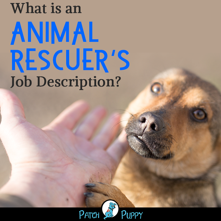12 Part Time Jobs Working With Dogs And Other Animals Jobs Working With Dogs Pet Sitting Jobs Dog Care