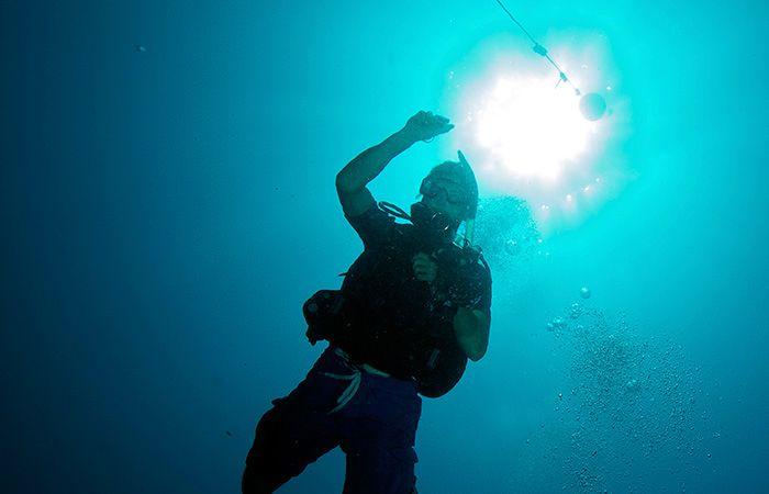 Hidden Battles on the Reefs : Oceanus Magazine