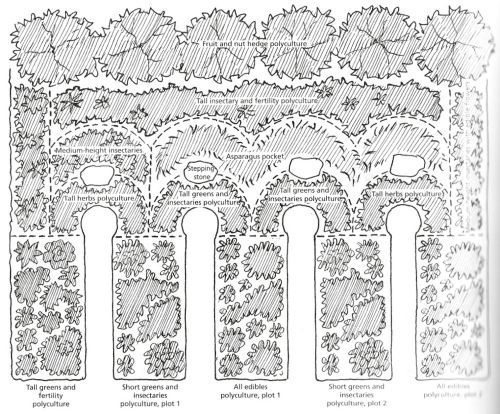 Design for a densely stacked, urban forest garden! Reminds me of techniques from the Holyoke Edible Food Forest.