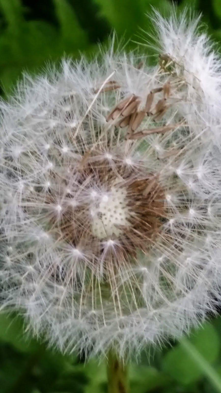 Tominowo Sposoby Rozsiewania Nasion Przyroda Pod Lupa Cz 8 Plants Flowers Flora